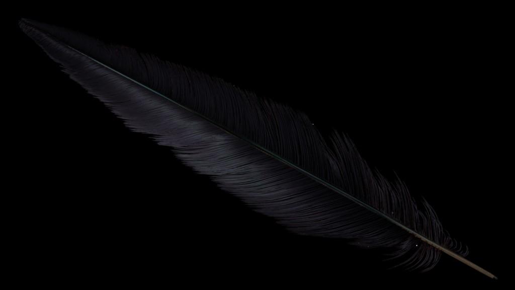 feather_fireflies1